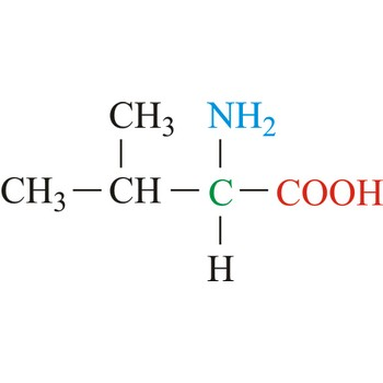 Valine Chemistry Dictionary Amp Glossary