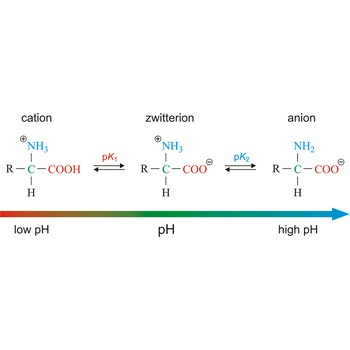 Chemistry Glossary Search Results For Carboxylate Group